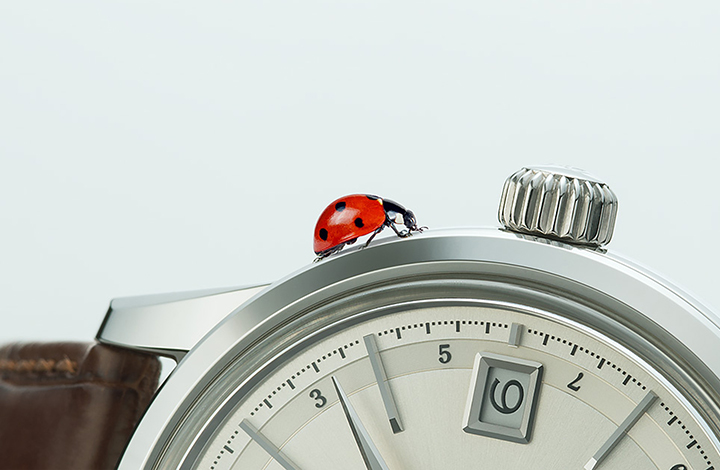 Vol.1 Designing watches from a bug's-eye view.