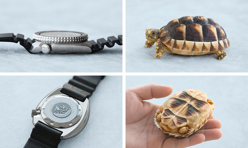 時計のタートルの3時側側面と裏面の写真/生きたカメの写真